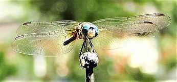 Dragon Fly 1 (2).jpg