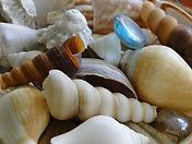 Shells 12.JPG