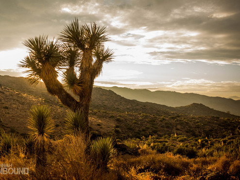 Joshua Tree in November: yes, it does get cold in the desert