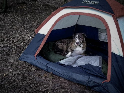 Worries in the Woods: Tips on how to stop your anxieties on camping alone.