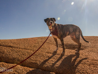 Bringing Your Dog to Joshua Tree National Park: how I made it work