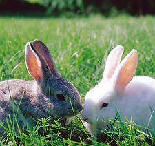 Rabbits, Ferrets, & Other Small Mammals