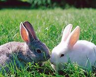 exotic vet cardiff , rabbit vet in cardiff, reptile vet in cardiff, rabbit vet bridgend, rabbit vet cardiff, south wales, rabbit, rabbit vet, rabbit vet specialist, bunny vet, bunny vet specialist,
