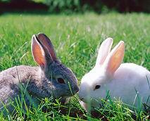 Socialisation for rabbits