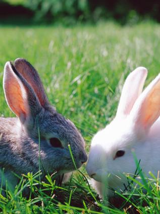 Sibbecks Bunnies