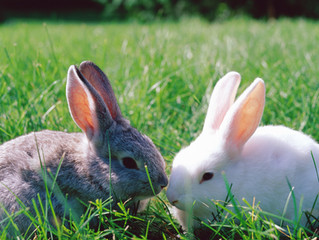 Rabbit Vaccinations: Get The Update, Then Get Up To Date!