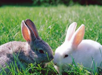 הארנבון