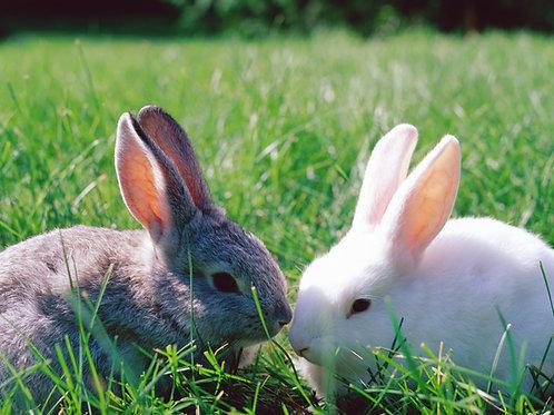 Bunnies, Bunnies and More Bunnies!