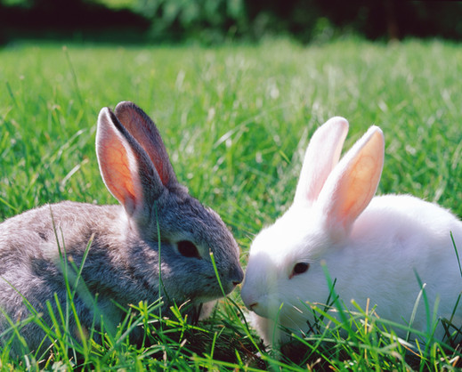 When rabbits are sweet on each other...
