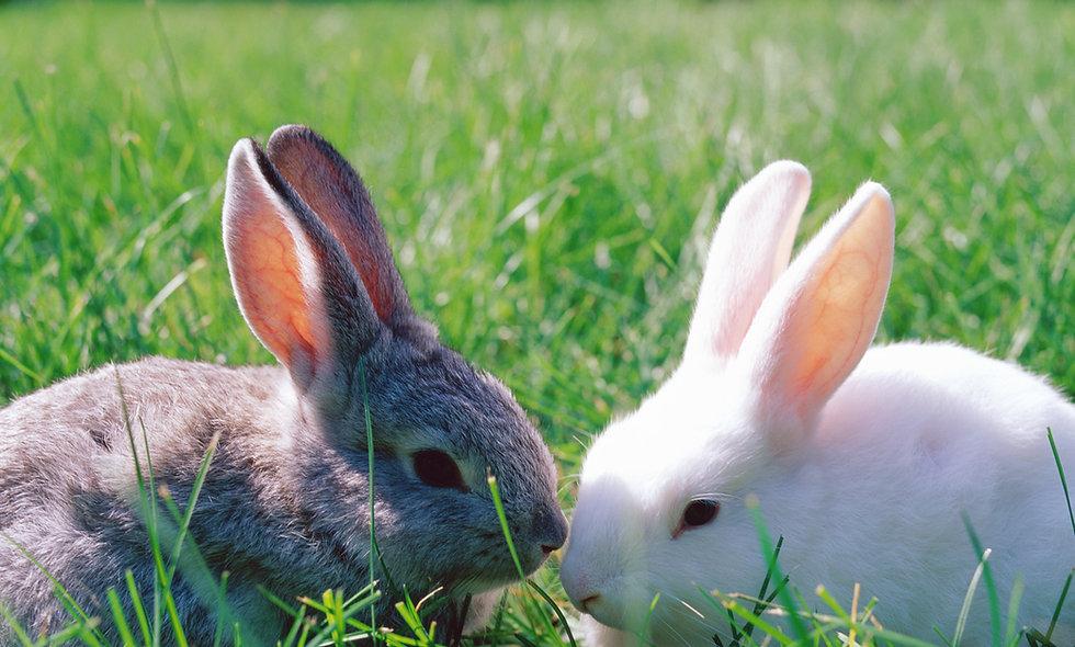 Nager- & Kleintiere-Ernährungslehre