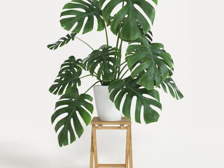 Rostliny v interiéru - trendy roku 2019
