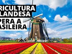 Vamos seguir o exemplo da Holanda - Brasil, o celeiro do mundo