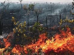 Incêndios na Amazônia - Contrato com a WWF
