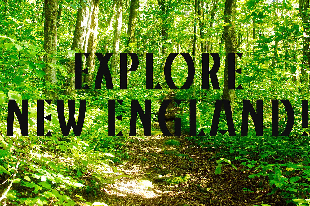 A New England Trail As It Travels Through The Green Mountains