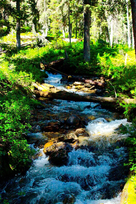 Creek Rushing Down The Mounain