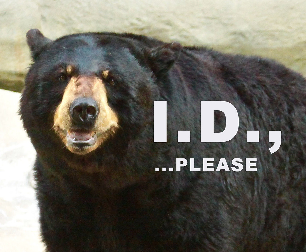 How To Identify Species Of Bears