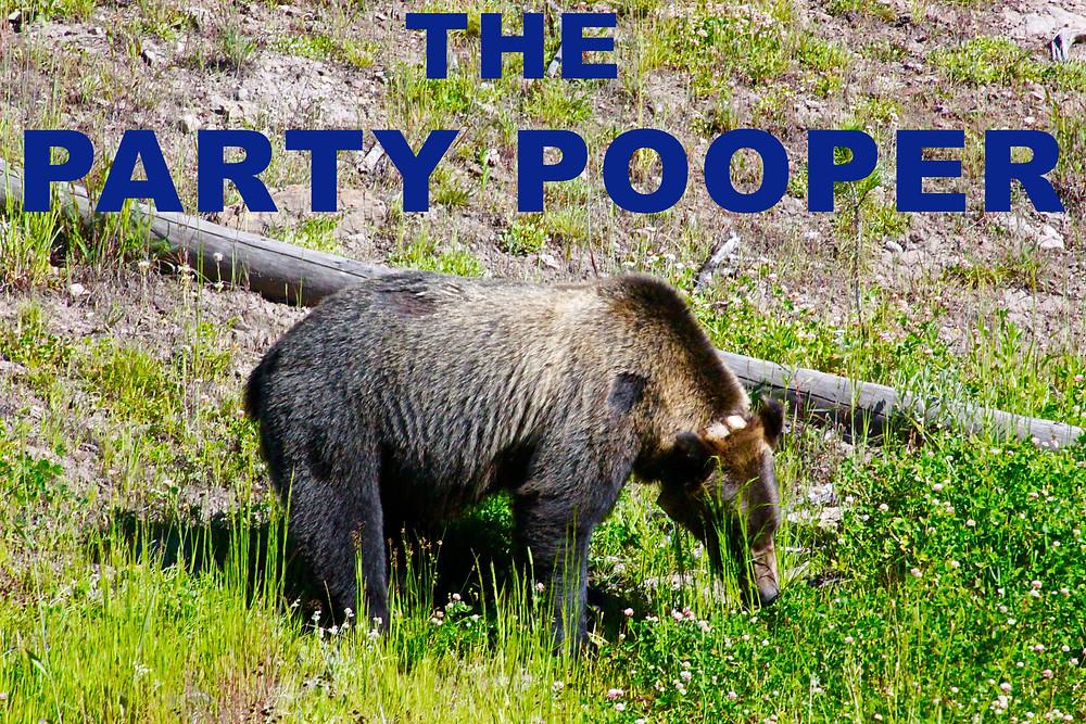 Tagged Bear In Grand Teton National Park