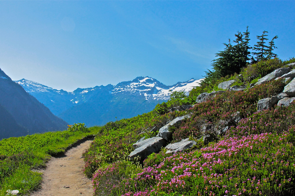 Wildflowers In Washington's Cascades