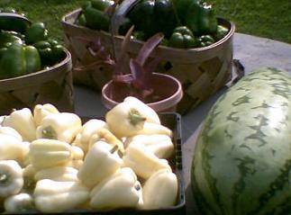Garden_Pepers