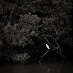 Egret, Hyogo