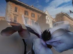 Rome, 2011