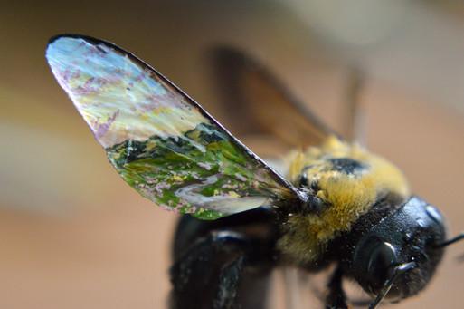 Bee Haven