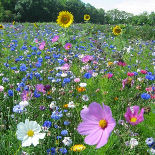 Meadow In My Garden