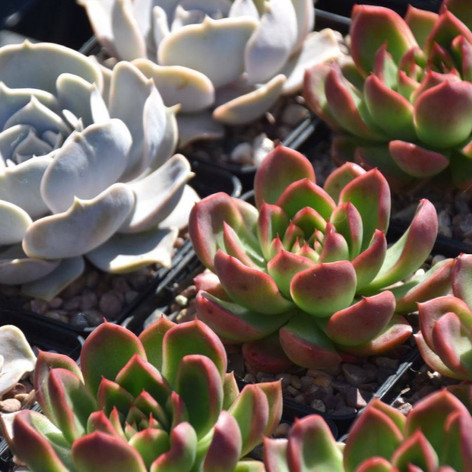 Beautiful Succulents from one of our nurseries