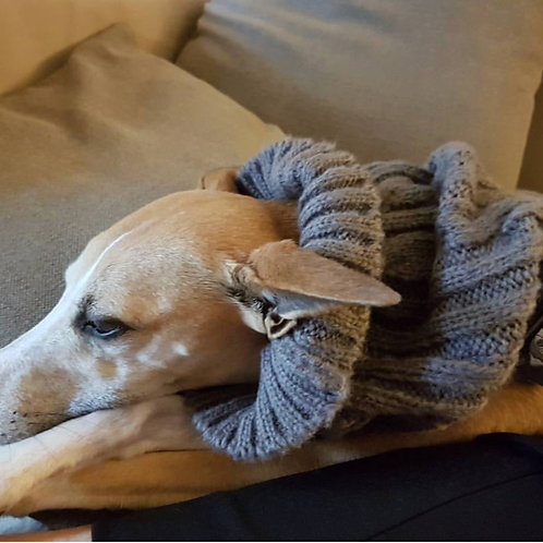 Dog Snood - in Grey (Small)