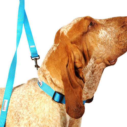 Doodlebone Dog Lead