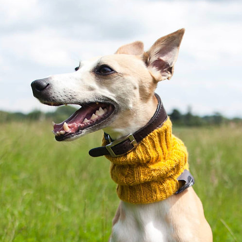 Dog Snood - in English Mustard (large)