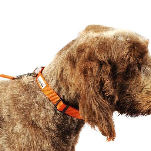 Doodlebone Dog Collar