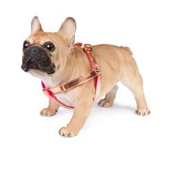 Lurril harness rose gold dog