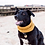 Thumbnail: Dog Snood - in English Mustard (Small)