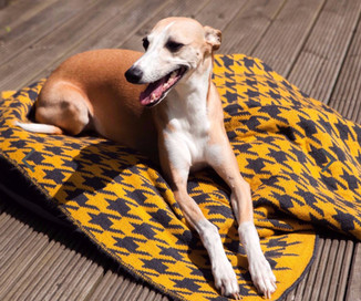 We are now stockingthe super stylish dog Snoods and Blankets from Ellery Bow.