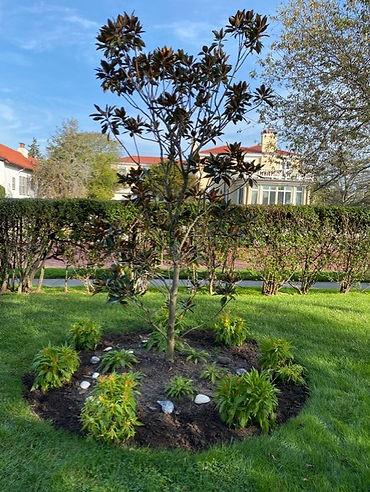 Covid Garden 1.jpg