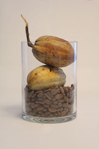 cacao color.jpg