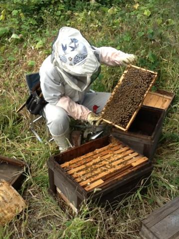 花粉交配用蜂の出荷準備