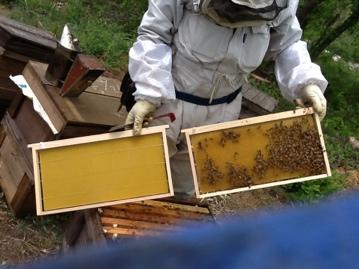 蜂の巣を作る