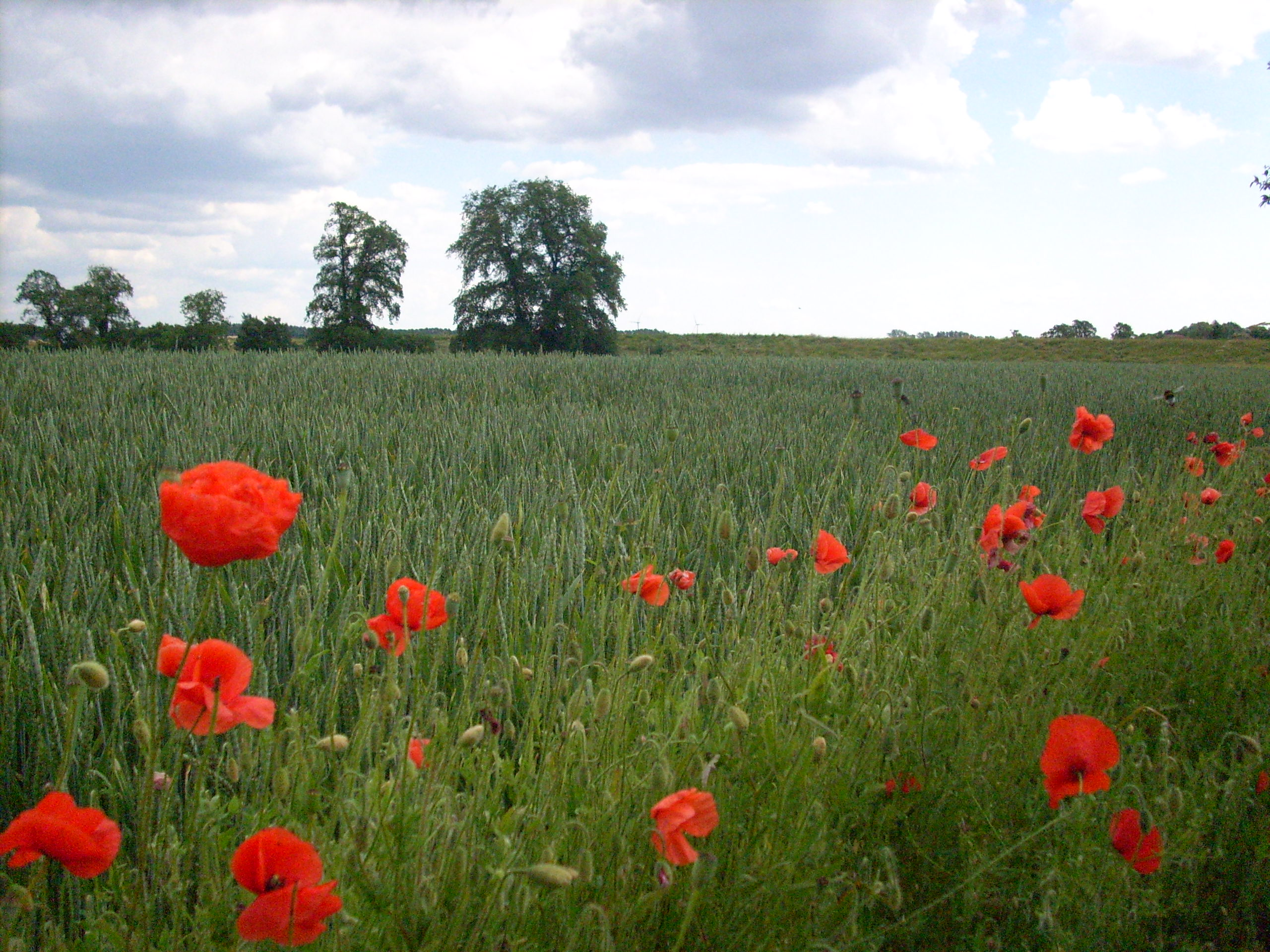 Explore the east Mohn