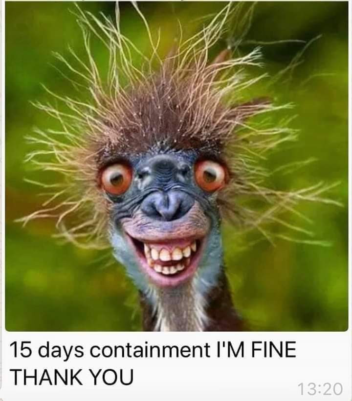Day 15 I'm fine thank you