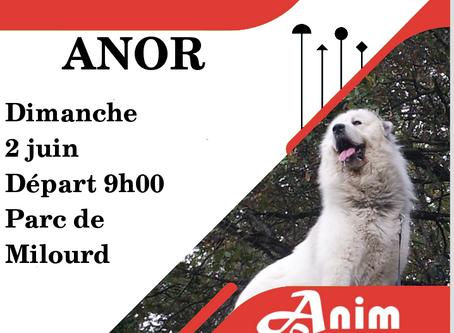 Cani-Rando du 02/06/19