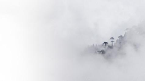 Araucarias in the Fog.jpg