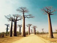 Her  yeri gezilesi MADAGASCAR