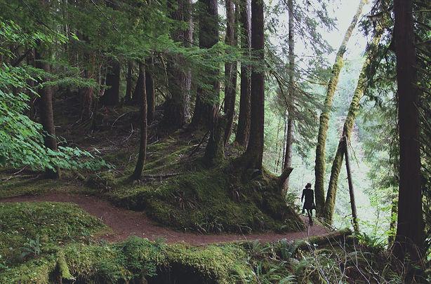 a-walk-amongst-the-800-year-old-douglas-