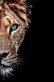 lioness_duet_xs_edited.jpg