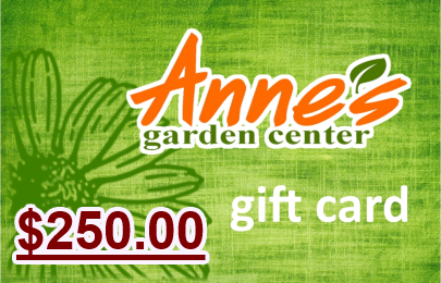 $250.00 Gift Card
