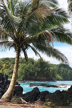 Palmtree, Haiku, Maui, Hawaii