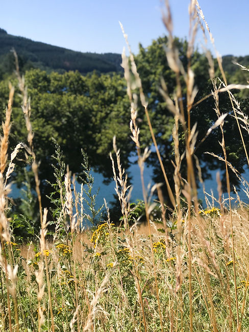 Luxembourg fields