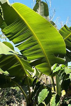 Palms, Brazil
